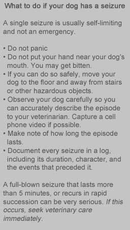 canine_epilepsy